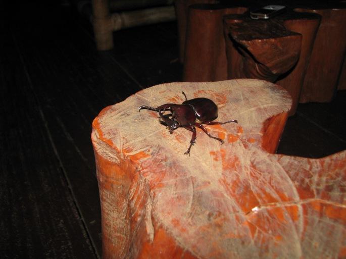 foto Kumbang